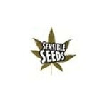 Buy 3 Seeds Pack and Get 1 Extra